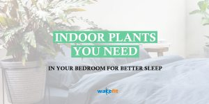 plants-for-your-bedroom